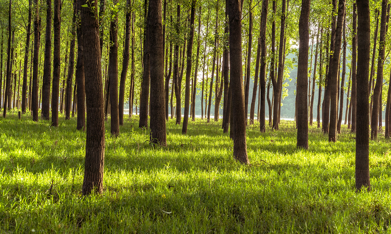 willhaben ist wie 16 Millionen Bäume